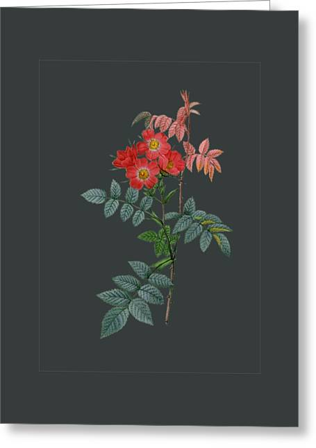 Rose4 Greeting Card by The one eyed Raven