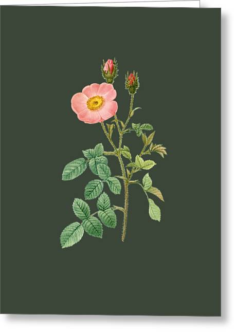 Rose8 Greeting Card by The one eyed Raven