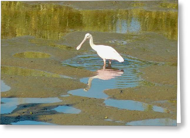 Roseate Spoonbill At Low Tide Greeting Card by Terry Cobb