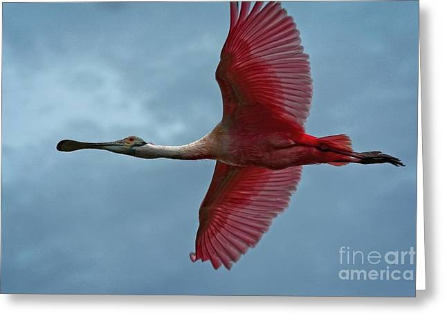 Roseate Spoonbill Bold Greeting Card