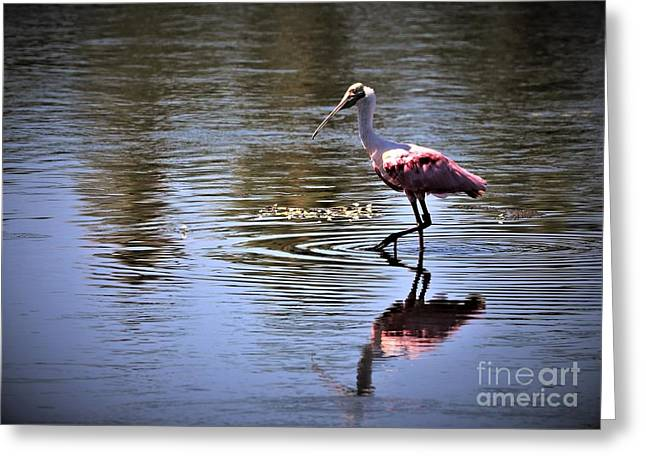 Roseate Spoonbill Greeting Card by Diann Fisher