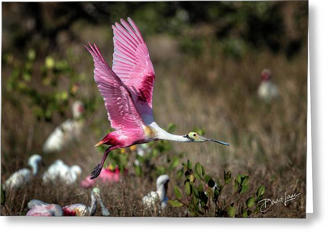 Roseate Spoonbill Flying Greeting Card