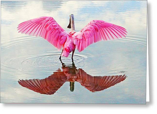 Roseate Spoonbill Pink Angel Greeting Card
