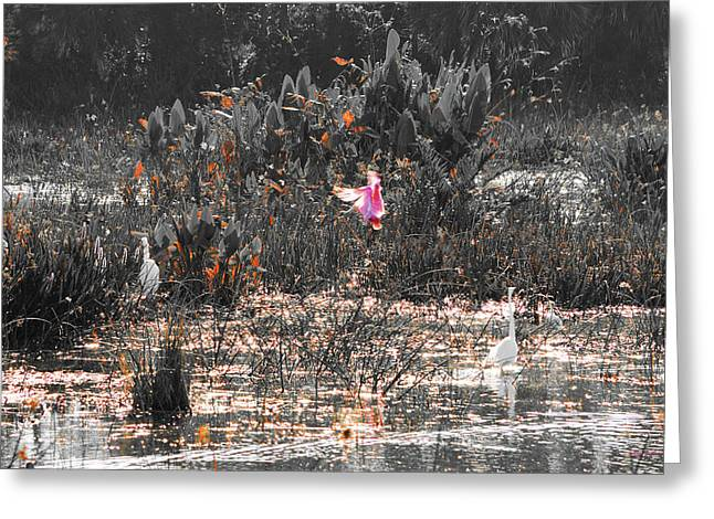 Roseate Spoonbill Select Color Greeting Card by Ken Figurski