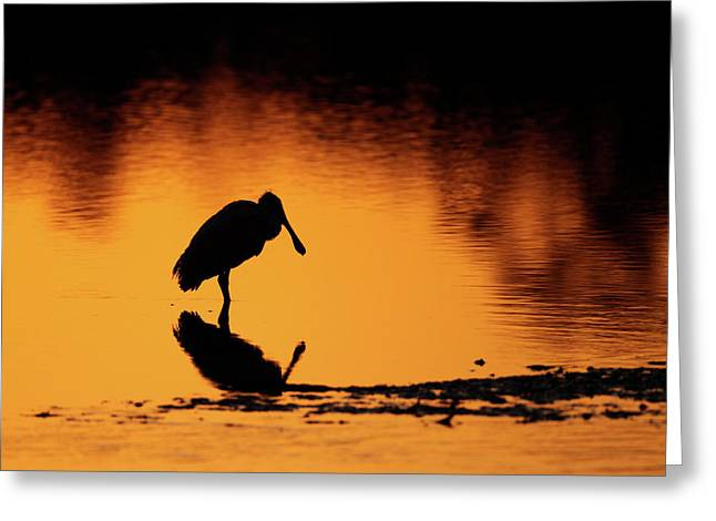 Roseate Spoonbill Silhouette Greeting Card