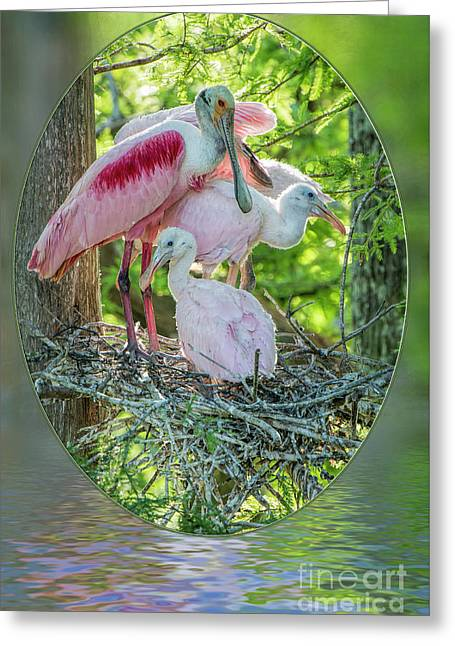 Roseate Spoonbills In Evangeline Parish Louisiana Greeting Card