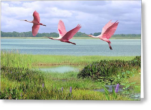 Roseate Spoonbills Of Florida Bay Greeting Card