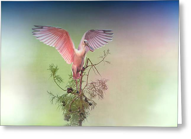 Spoonbill Greeting Cards - Roseate with Wings Outspread Greeting Card by Bonnie Barry