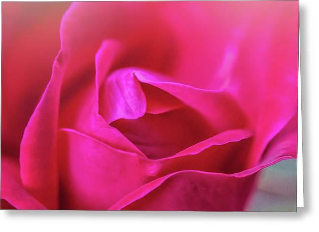 Rosebud Madness Greeting Card