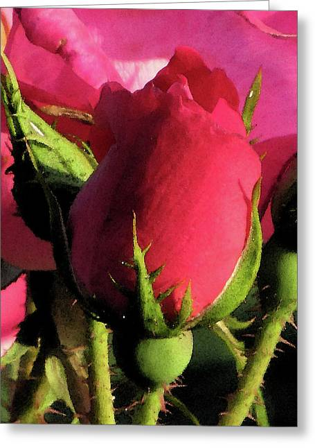 Rosebud Greeting Card by Michele Caporaso