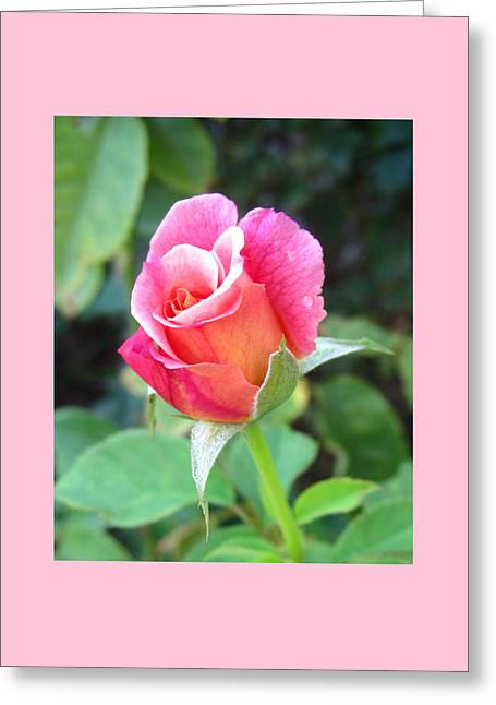 Rosebud With Border Greeting Card