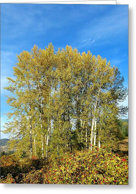 Rosehips And Cottonwoods Greeting Card by Will Borden