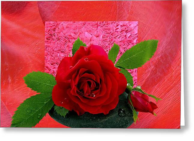 Roses 3 Greeting Card by Manfred Lutzius