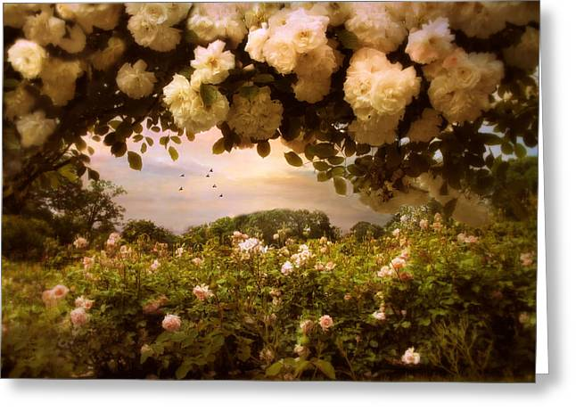 Roses Abound Greeting Card