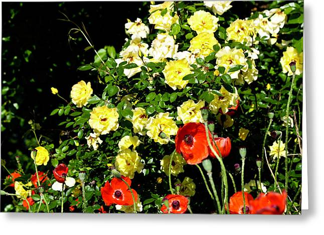 Roses And Poppies Greeting Card by Teresa Mucha