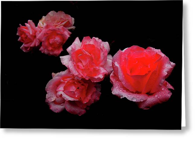 Roses And Rain Greeting Card