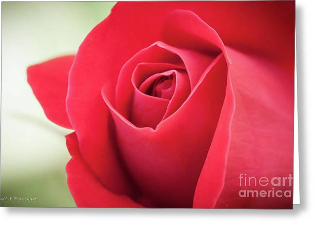 Greeting Card featuring the photograph Roses Are Red by Todd Blanchard
