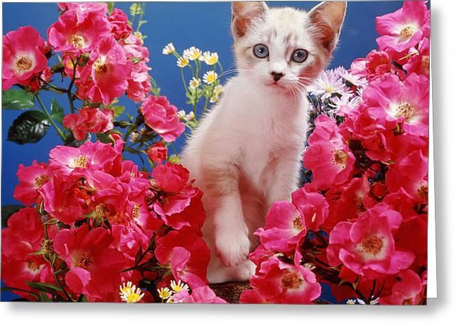 Roses Galore Greeting Card