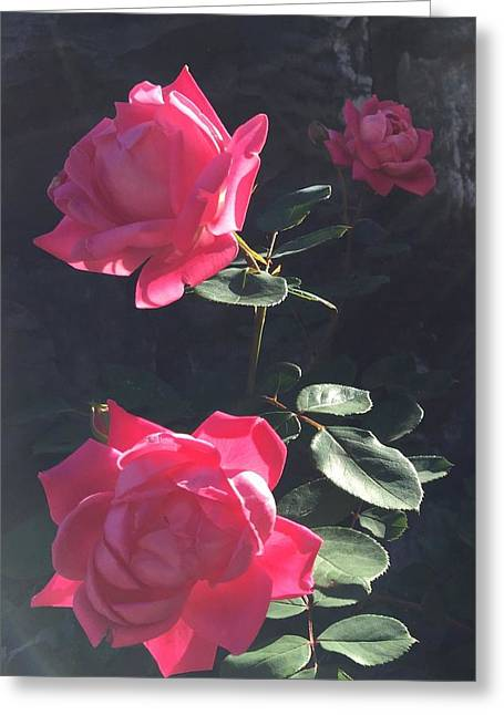 Roses In The Sun Greeting Card by Daniel Sparks