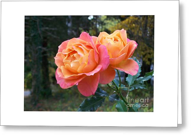 Roses In The Woods Greeting Card