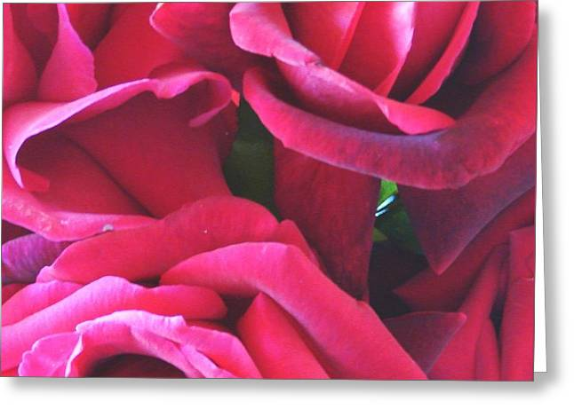 Roses Like Velvet Greeting Card