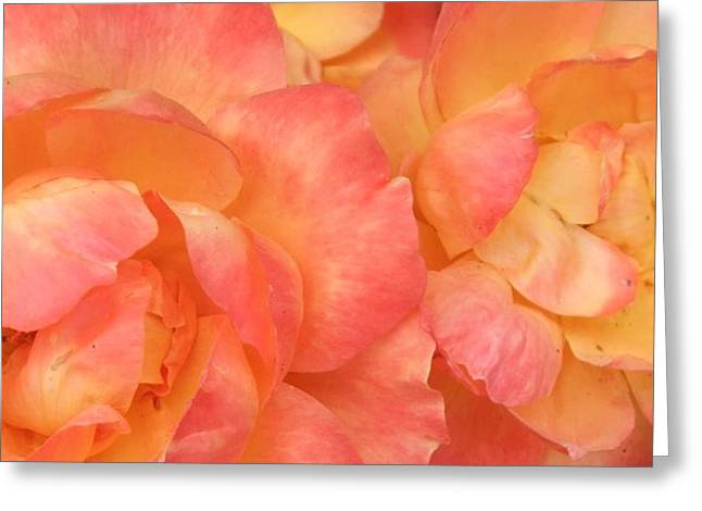 Roses Of Friendship Greeting Card by Deborah Brewer