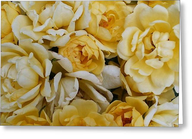 Roses Of Joy Greeting Card by Deborah Brewer