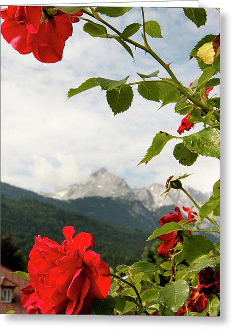 Greeting Card featuring the photograph Roses Of The Zugspitze by KG Thienemann