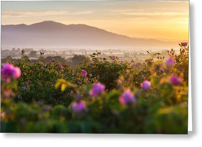 Roses Valley Greeting Card by Evgeni Dinev