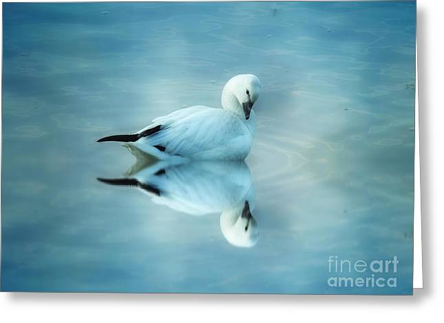 Ross Goose Greeting Card by Suzanne Handel