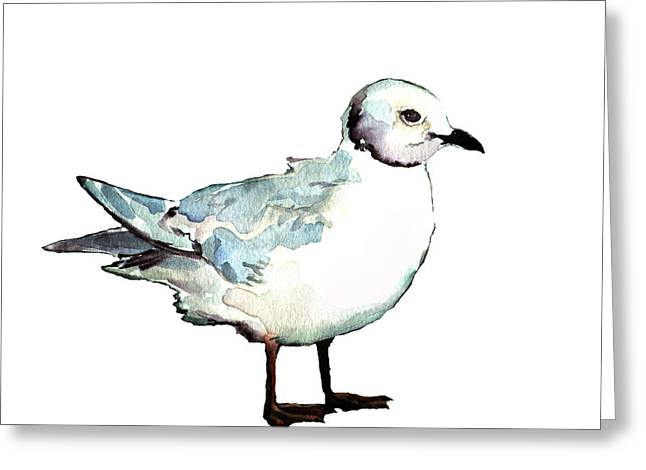 Ross's Gull Greeting Card
