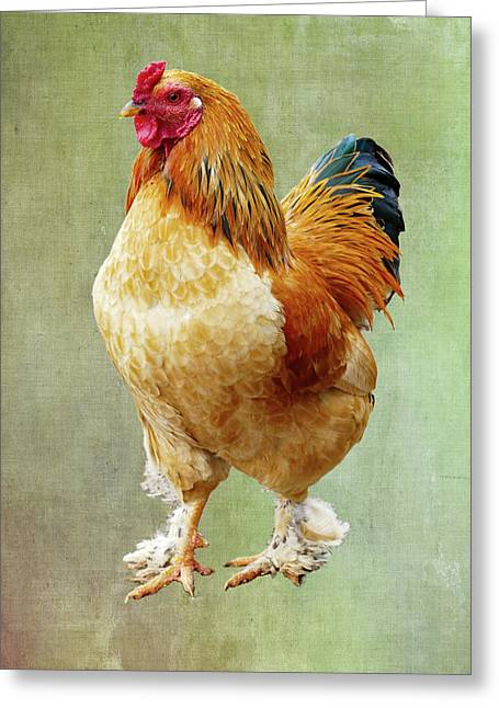 Otis T Rooster Greeting Card by Elijah Knight