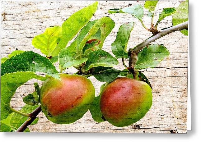 Rosy Apples Greeting Card