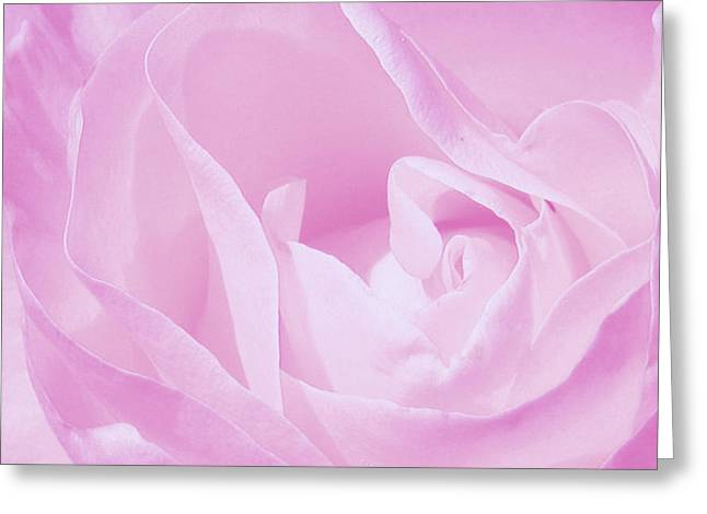 Rosy Cheek Pink Greeting Card by Janice Westerberg