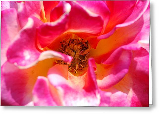 Rosy Future Greeting Card by Don  Wright