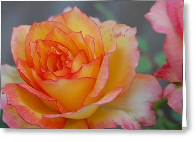 Rosy Outlook Greeting Card by Jean Booth