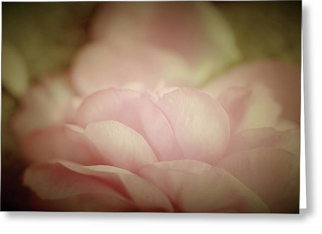 Rosy Sweet Greeting Card by The Art Of Marilyn Ridoutt-Greene