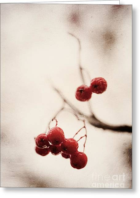 Rote Beeren - Red Berries Greeting Card