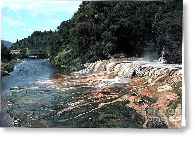 Rotorua 01 Greeting Card by Rick Piper Photography