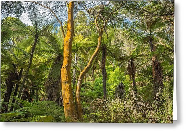 Rotorua Forest Greeting Card
