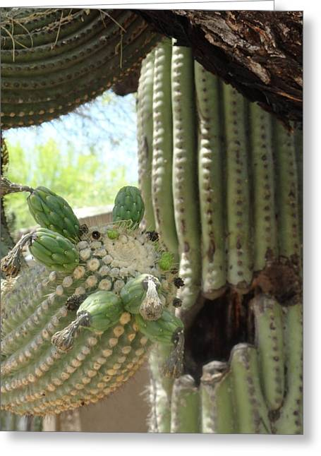 This Cactus Is Rotten To The Core Greeting Card