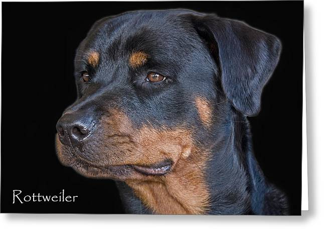 Rottweiler Greeting Card by Larry Linton
