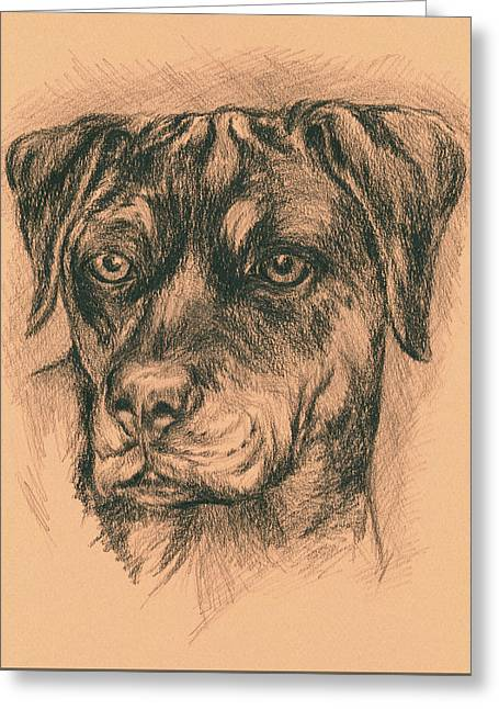 Rottweiler Mix In Charcoal Greeting Card by MM Anderson