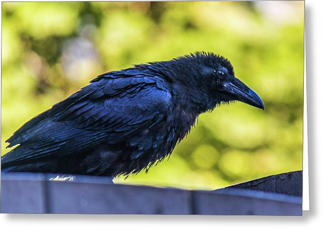 Greeting Card featuring the photograph Rough Crow  by Jonny D