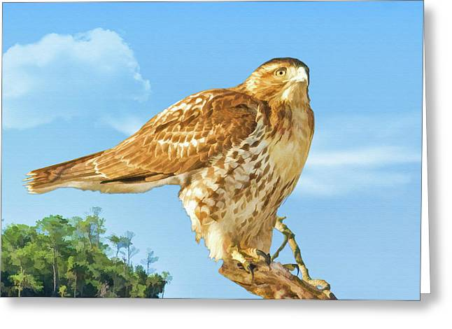 Rough-legged Perch Greeting Card by Delores Knowles