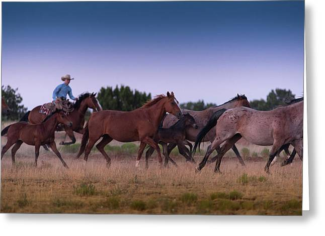 Round Up At Dawn Greeting Card by Steve Gadomski