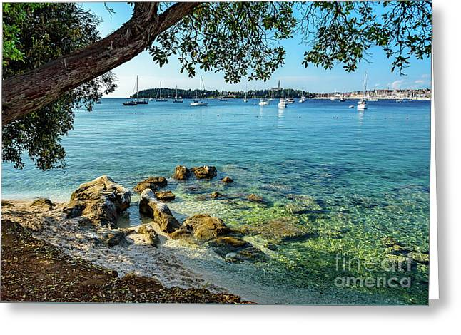 Rovinj Old Town, Harbor And Sailboats Accross The Adriatic Through The Trees Greeting Card