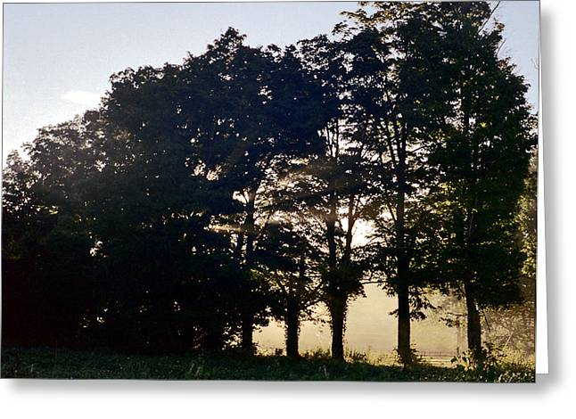 Greeting Card featuring the photograph Row Of Trees by Josean Rivera