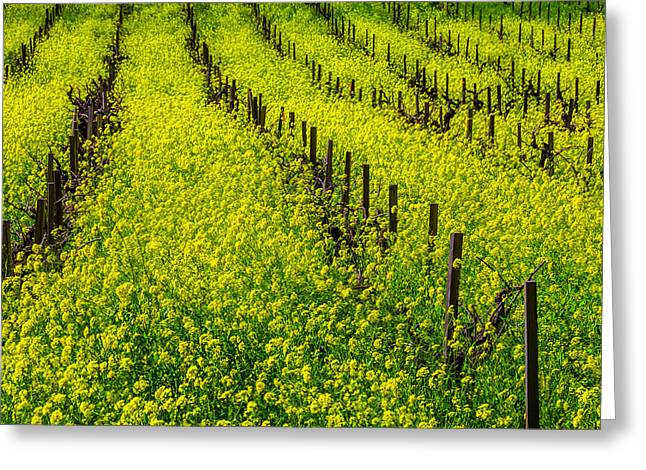 Rows Of Mustard Grass Greeting Card by Garry Gay