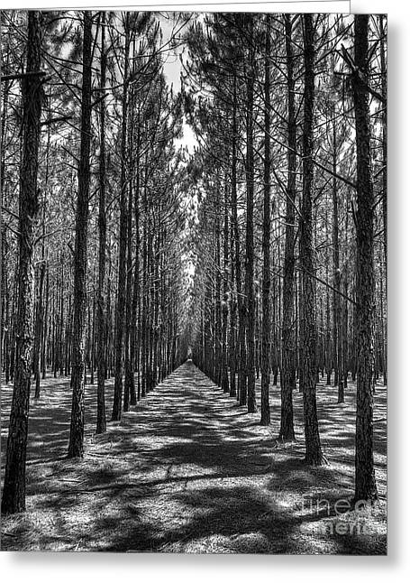 Rows Of Pines Vertical Greeting Card
